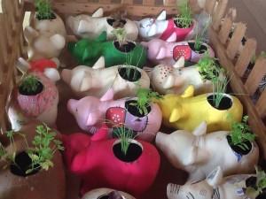 Os porquinhos de gesso, antes cofres, se transformam em vasos de plantas que retornam aos colaboradores. Foto: Fernanda Bevilaqua.